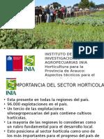 Produccion Hortalizas Provincia de Arauco