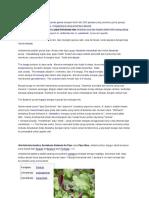 aristolochiaceae-Aristolochia