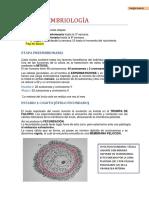 Apuntes anatomía COMPLETOS