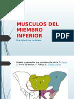 Clase 3 Musculos Miembro Inferior