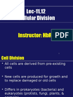 Cell Cycle Hbr