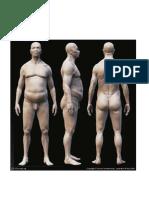 Anatomía - 3d Cuerpo II
