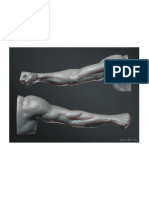 Anatomía - 3d Brazo I