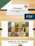 Estructura Granos de Cereales