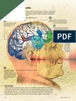 Neurobiologia Del Habla