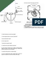 1 Atividade Fisiologia Cardiovascular