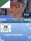 normal flora of GI.2015.pptx