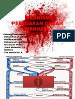 Mekanisme Peredaran Darah Manusia