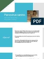 Parvovirus-caninos