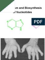 Metabolisme Dan Biosintesis Nukleotida