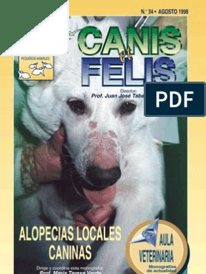 diabetes mellitus juvenil canina