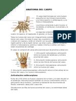 Anatomia Del Carpo