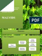 taxonomia malvids