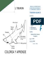 TIBURON BLANCO 1.docx