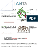 Asignacion de La Planta