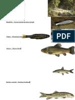 Identificacion de Pesca