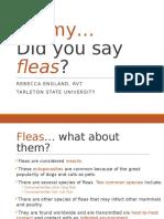 fleas ppt