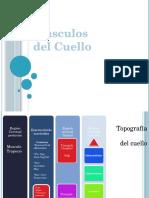 musculosdelcuellomajo-130608101826-phpapp02.pptx