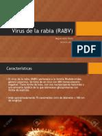 Virus de La Rabia (RABV)
