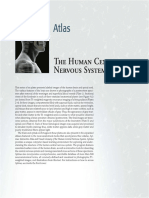 Atlas Human Cns