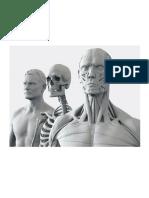 Anatomía - 3d Cabeza VII