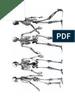 Anatomía - Ilustración II