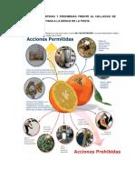 Acciones Permitidas y Prohibidas Frente Al Hallazgo de Una Fruta Afectada a La Mosca de La Fruta