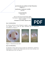 Bitácora de La Germinación de Semillas de Frijol Phaseolus Vulgaris