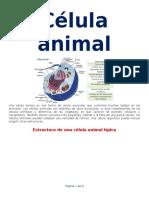 Célula Animal