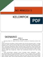 PLENO MINGGU 5
