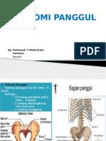 anatomi panggul.pptx