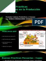 Buenas Practicas Pecuarias en La Producción de Cuyes