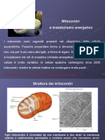 I Mitocondri 23