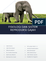 Fisiologi Dan Sistem Reproduksi Gajah
