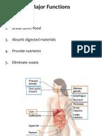 16. Digestive System
