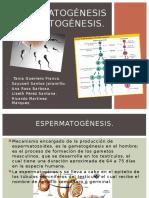 Ginecologia Esperma y Gameto Genesis