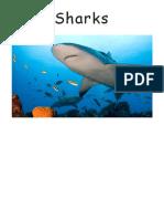 Sharks.pdf