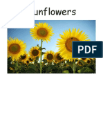 Sunflowers.pdf