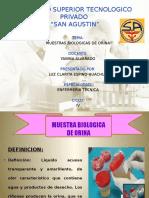 Dipositivas Muestra Biologica Orina
