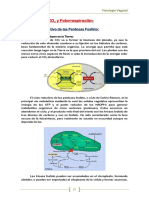 06-Metabolismo_fijacion_CO2.pdf