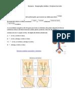 Resumo Respiraocelularesistexcretor 140201154209 Phpapp01