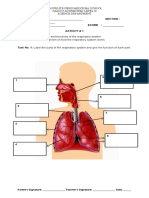 activity sheet body system