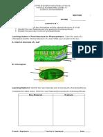 activity sheet photosynthesis