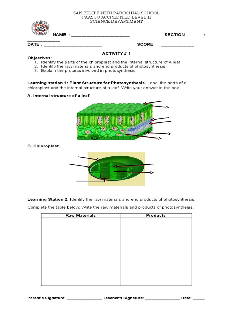 Activity sheet photosynthesis ccuart Image collections