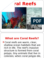 Coral Reefs 2016