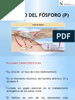 El Ciclo Del Fósforo (p)