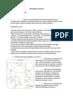 INSUFICIÊNCIA HEPÁTICA.pdf