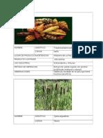 ficheros plantas 2.0.docx