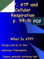 adpatpandcellularrespiration  1