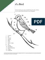 Bird Diagram